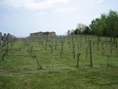 20080516_chrismanmillvineyard.jpg