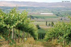 Upland Vineyards