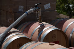Pumping the wine out of the barrels