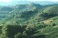 Barolo area in Piedmont, Italy