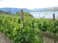 Vineyards in the new Lake Chelan AVA