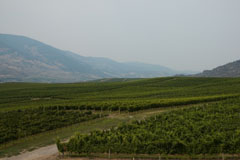 Vineyards in the Okanagan Valley, B.C.