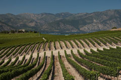 Benson Vineyards in the Lake Chelan AVA