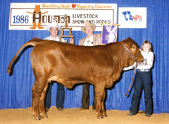 Kori with her Grand Champion Red Brangus heifer at the 1986 Houston Livestock Show and Rodeo