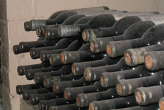 Dusty, old wine bottles